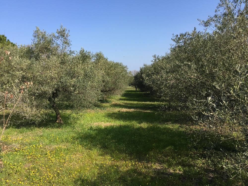 Terrains b tir vendre villevieille 30250 olivette 1 for Terrain olivet